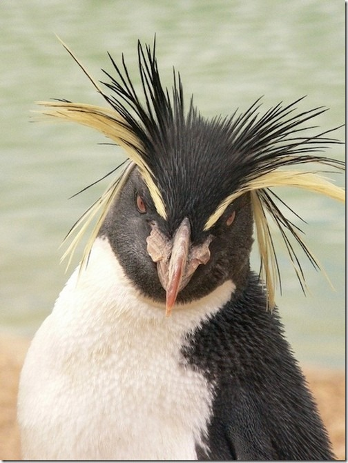 awesome-animal-haircuts6