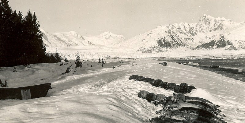 alaska-glaciers-16