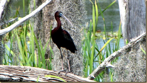 OrlandoWetlands_114