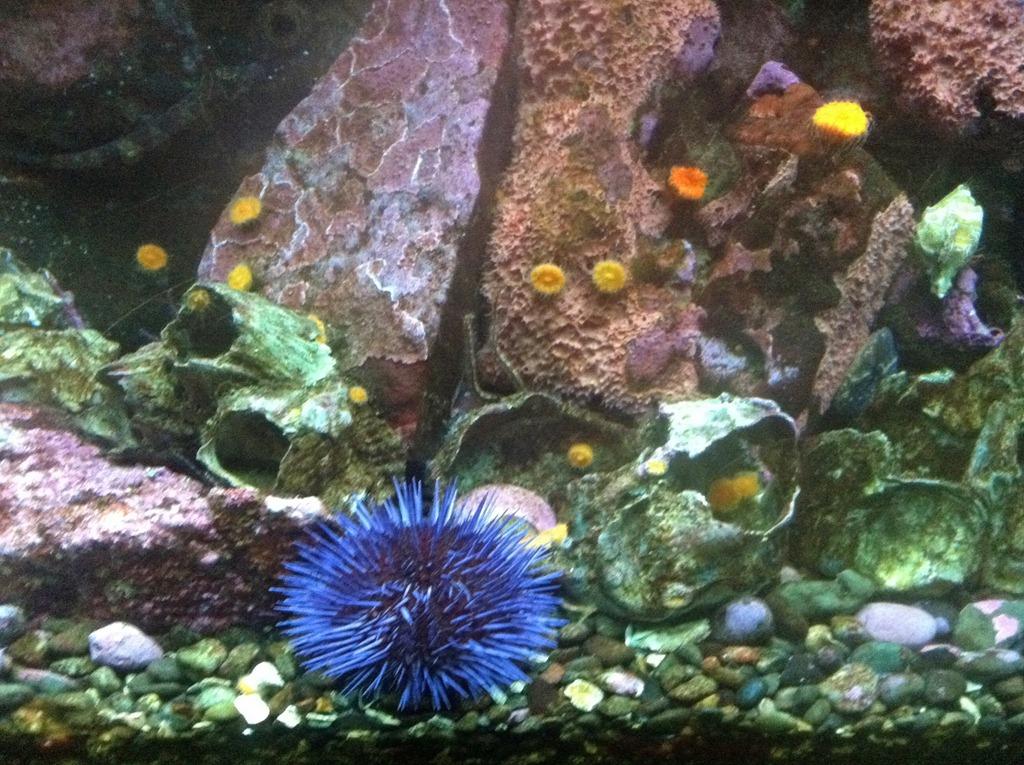 [Aquarium-63.jpg]