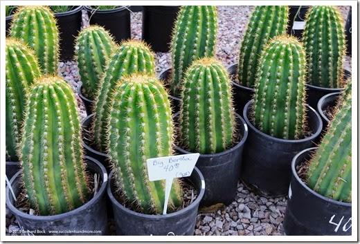 141231_Tucson_Bachs_0004