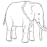 elefante.jpg