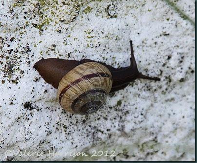 11-snail