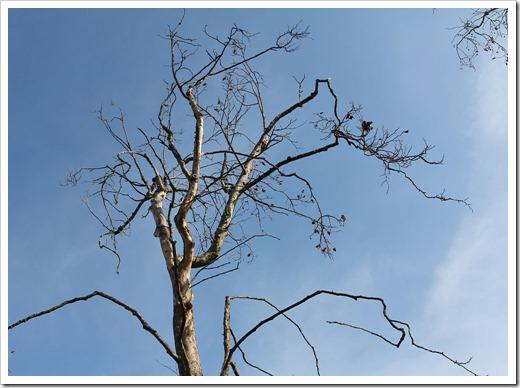 111210_tree_silhouette