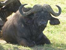 Big 5 Buffalo
