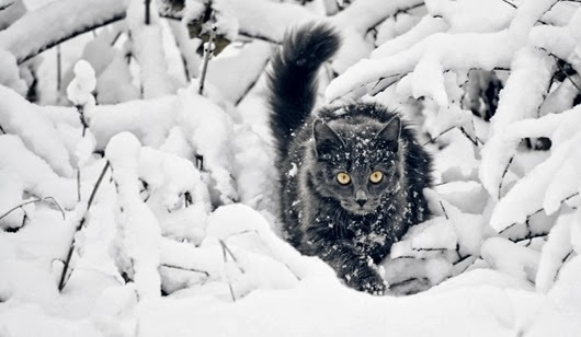 cats-in-snow-1