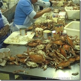 blue crab-25