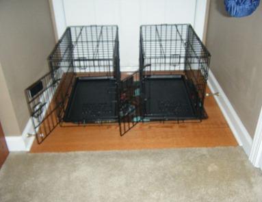 dogprison