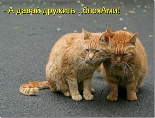 0900bc17d0793d8cc724c60a9eb_prev