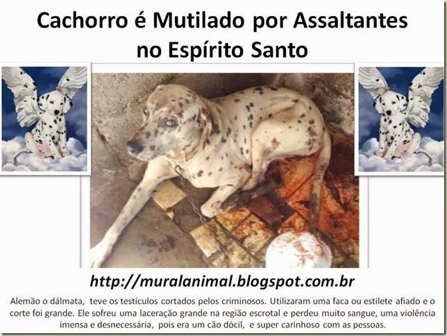 Cachorro é Mutilado por Assaltantes