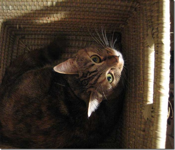 kitty-in-the-box-1501