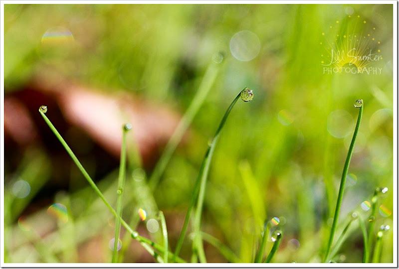 dewdrops-4727