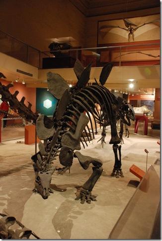 11-12-12 B Museum Of Natural History 007