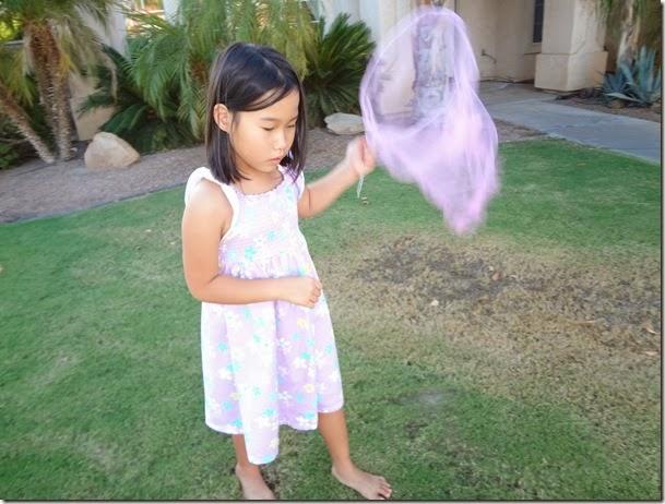 Butterfly Nets 023