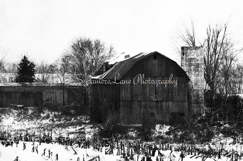 winter barn-web-black and white