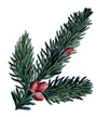 pine cone vintage image graphicsfairy3c