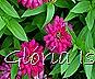 Glória Ishizaka -   Kyoto Botanical Garden 2012 - 81