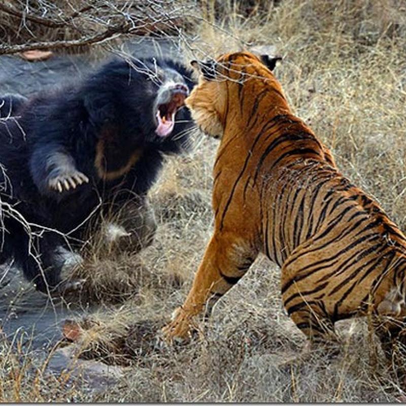 15 sensacionais fotografias de luta entre animais