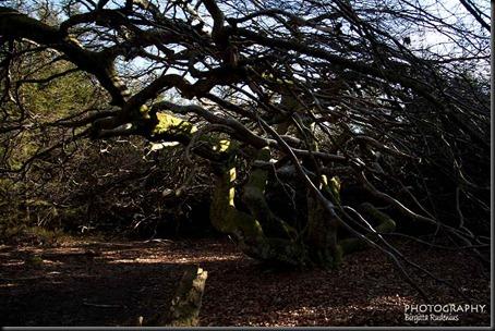tree_20120408_bok