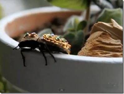bijuterii din gândaci vii