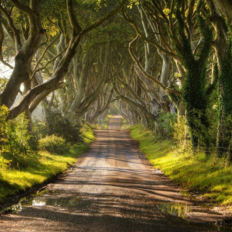 The Dark Hedges in Ireland