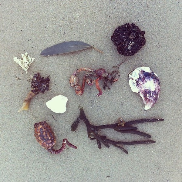 Tidal detritus at Tathra by Alchemy