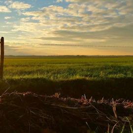 by Jojanneke Vos - Landscapes Prairies, Meadows & Fields