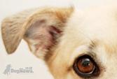 dog-news-thumb