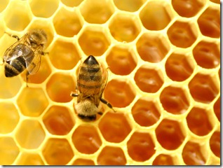 1342003278_honey-arab-bees