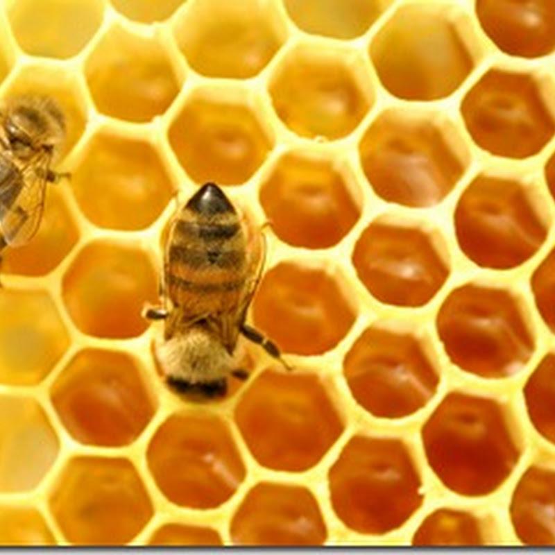 ثلاث طرق لاستخدام العسل بطريقة صحيحه وصحيه