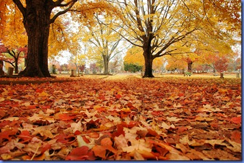 outono-foto
