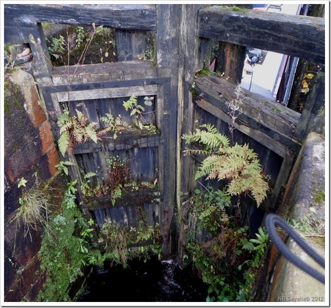 SAM_3997 Lock Garden