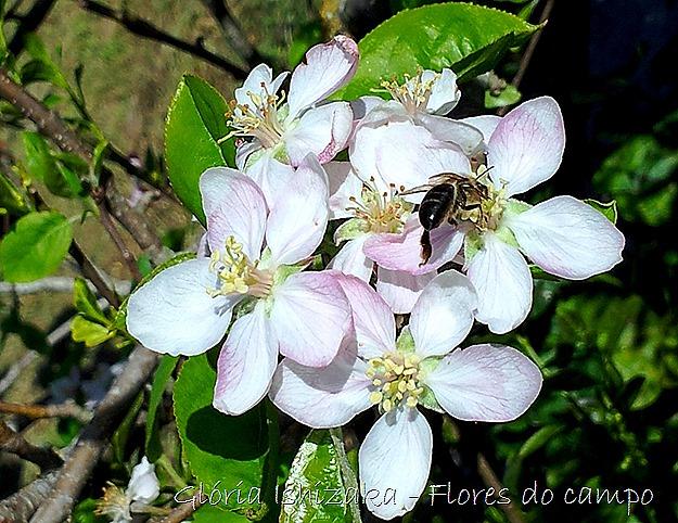 Glória Ishizaka - flores - 15