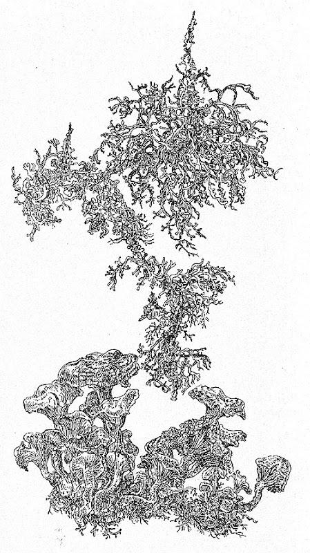 växtnov