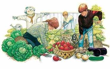 veg-garden
