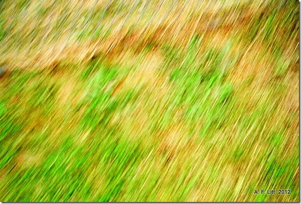 Abstract.  2006.  Because I am in a Fuzzy Mood today.  Photo of the Day, April 10, 2012.