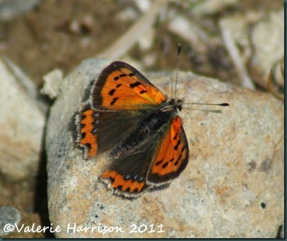 28-small-copper