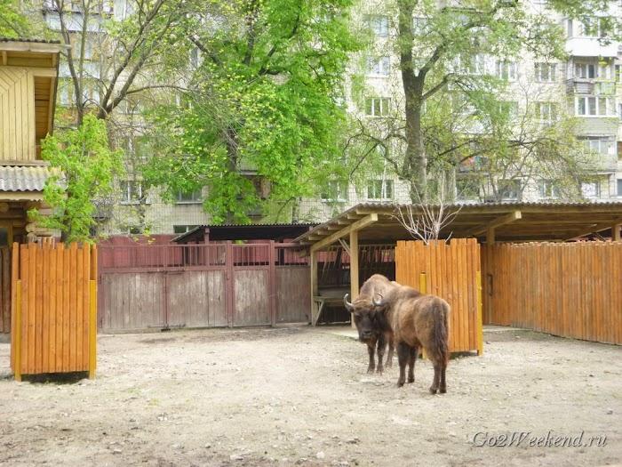 Kiev_Zoo_13.jpg