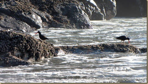 Harris Beach_151