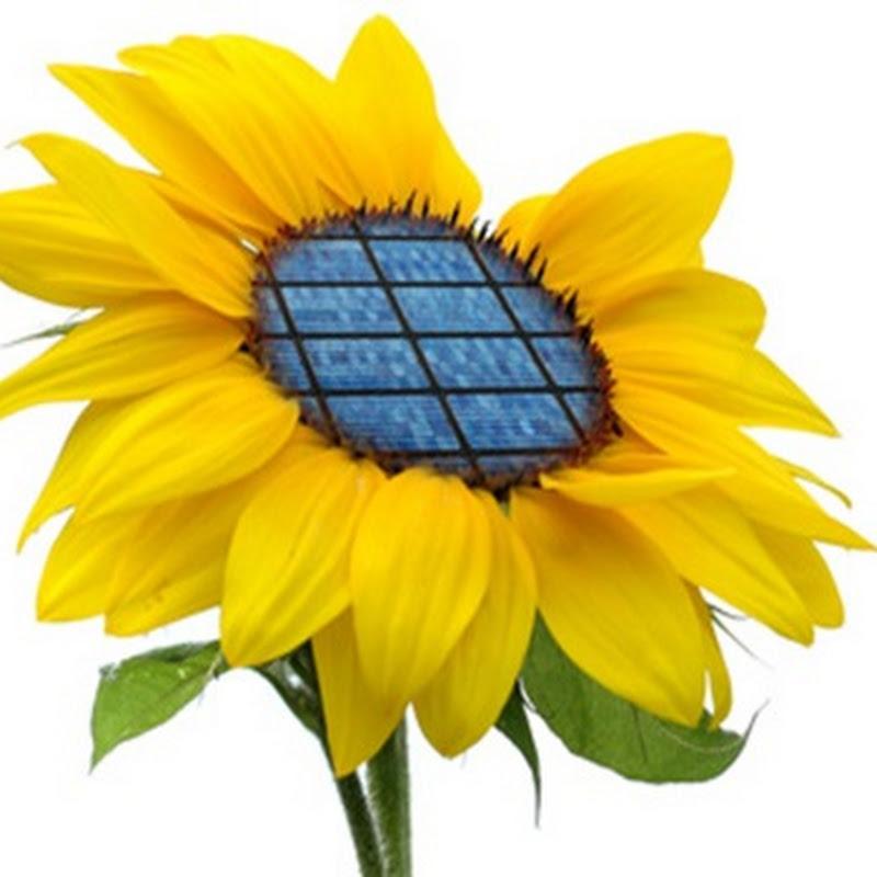 Energías Renovables tienen un impacto prácticamente nulo y siempre reversible.