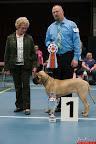 20130510-Bullmastiff-Worldcup-1033.jpg