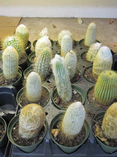 A selection of cacti are available for simple house plants.