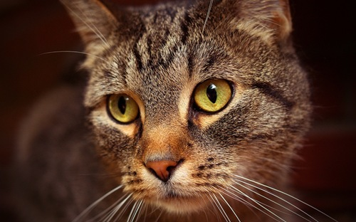 bored_cat_3-1280x800