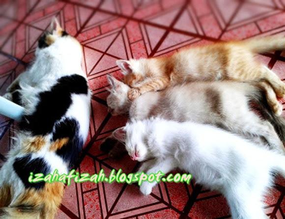 kucingcomel7