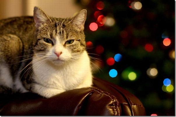 Gatos odeiam o natal (16)