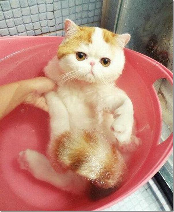 gato tomando banho (2)