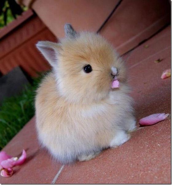 funny-animals-cute-8