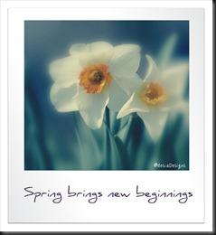 spg new beginnings