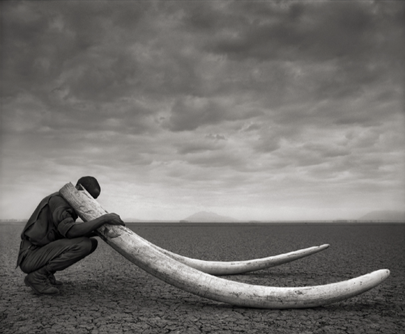 Cover of the 21 April 2014 report, 'Ivory's Curse: The Militarization and Professionalization of Poaching in Africa', by Born Free USA. Photo: Nick Brandt / Big Life Foundation