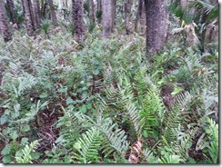 Prehistoric Ferns